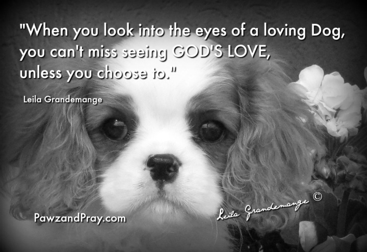 God's love, dogs love