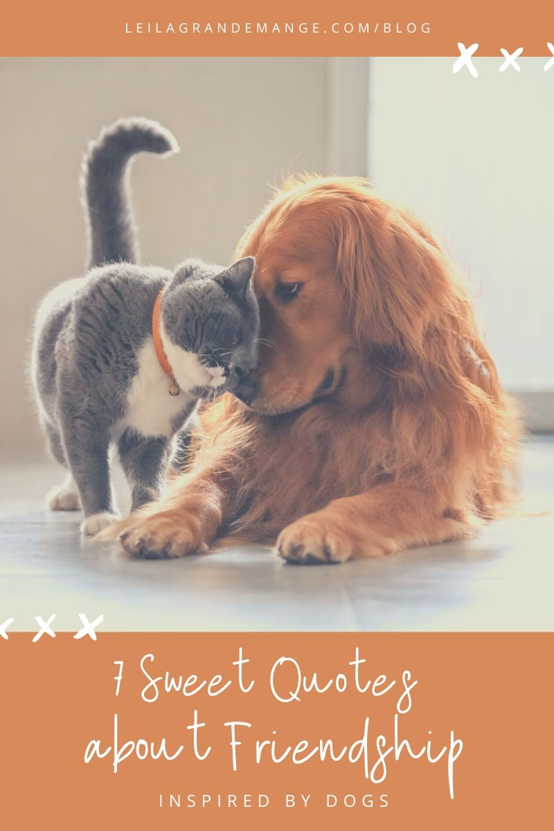 7 Sweet Friendship Quotes Inspired by Dogs