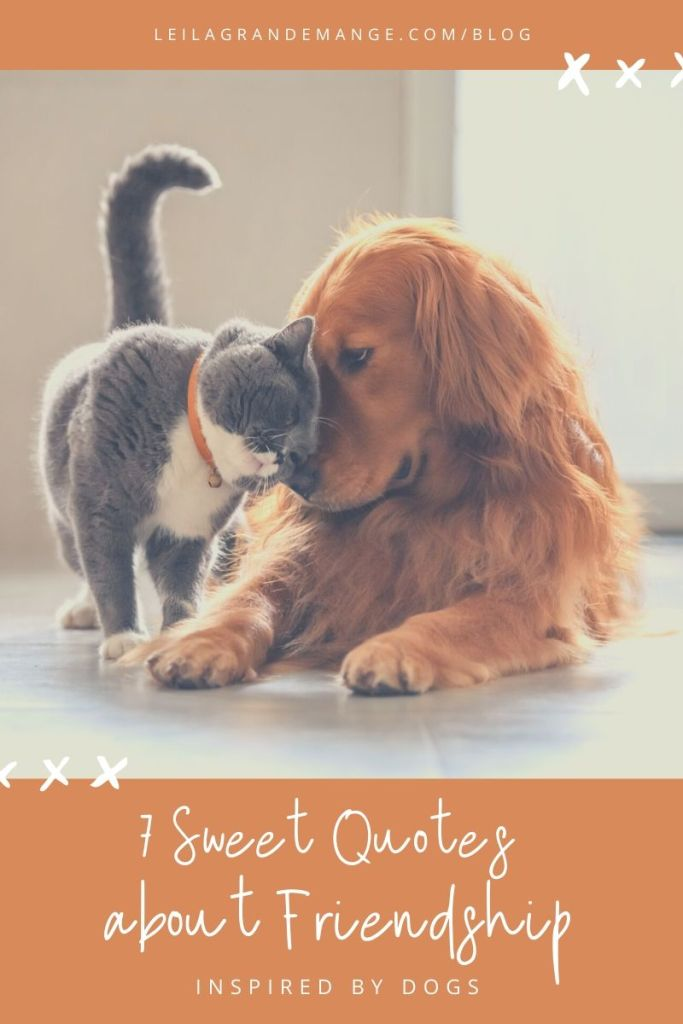 7 Sweet Friendship Quote Inspired by Dogs