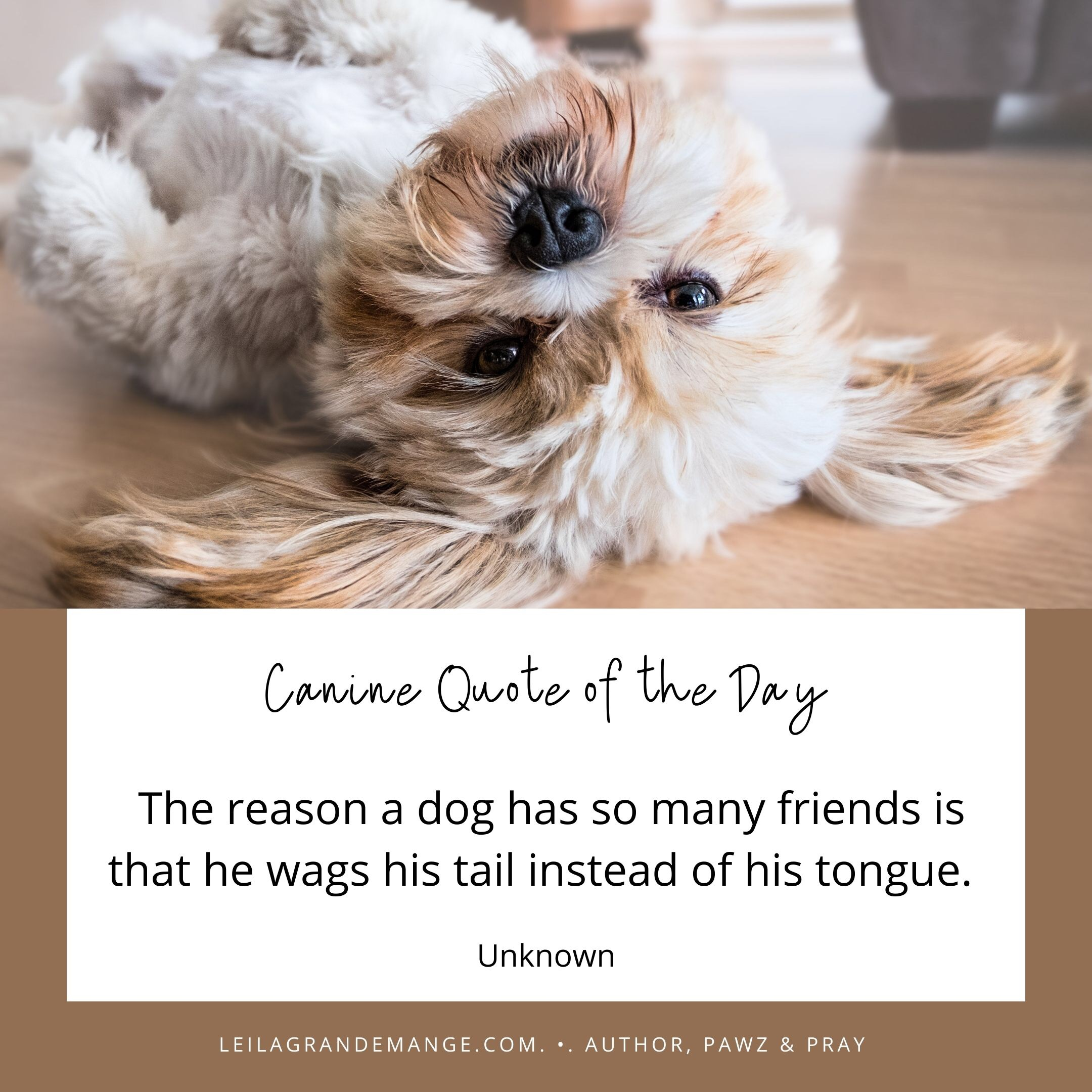 Inspiring Dog Quote [The reason a dog has so many friends…]