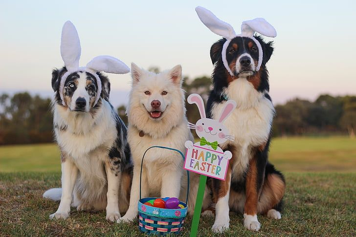 3 Essential Easter Pet Safety Tips