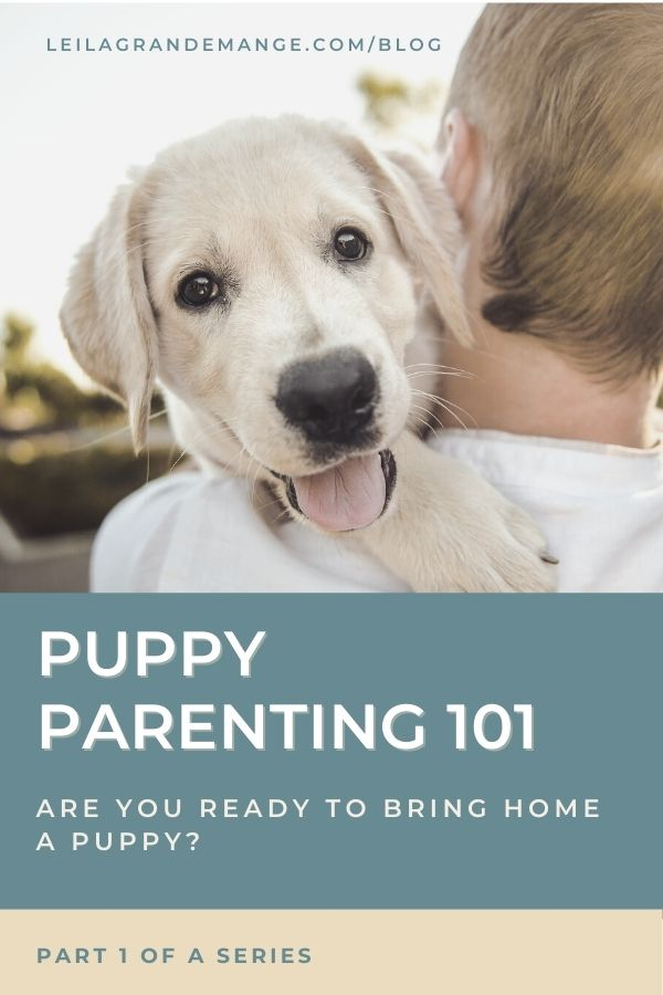 Bringing home a new puppy, blog